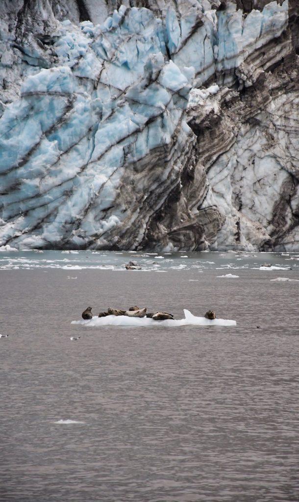 One Day in Glacier Bay - Wildlife - Seals