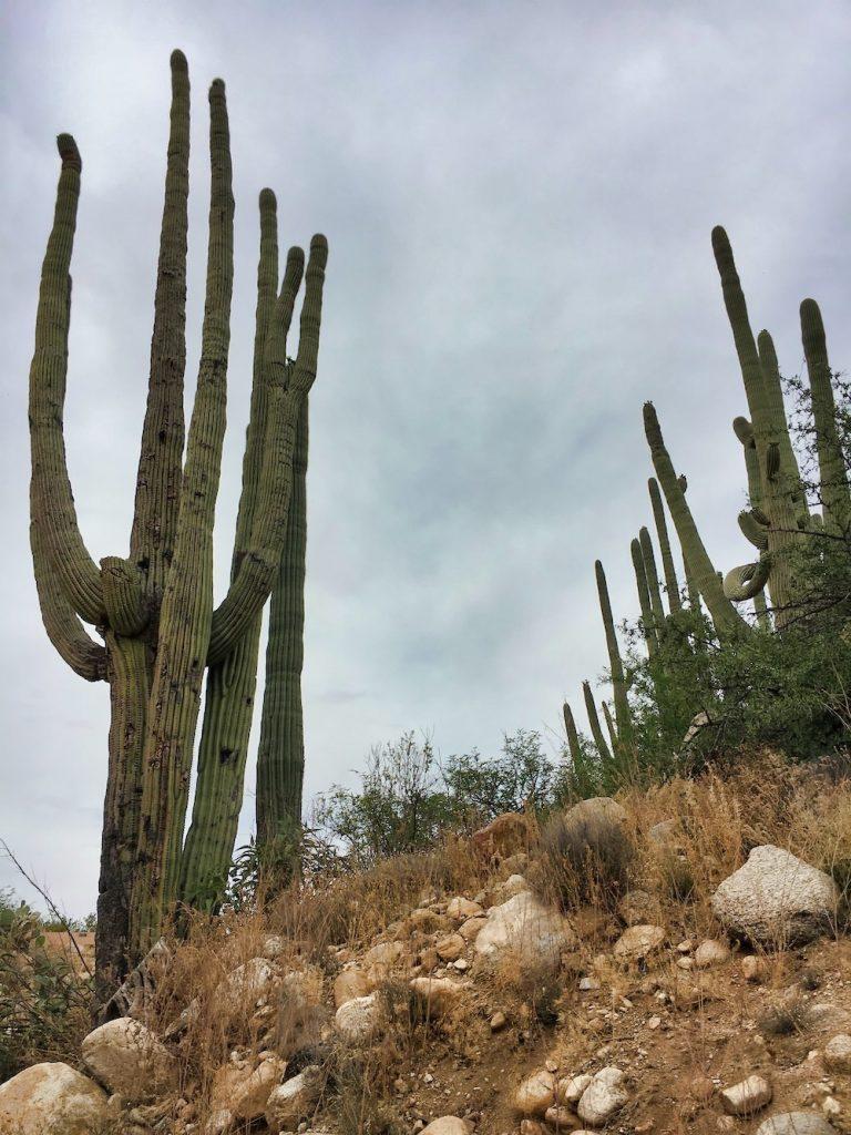 Saguaro National Park Itinerary - Hiking Trail