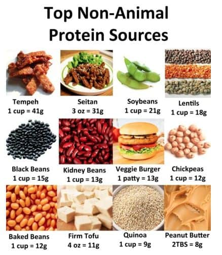 Plant-based sources of proteins