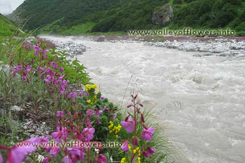 Valley of flowers, Pushpawati river. Deep inside the valley, its 7 kilometers from Ghangaria.
