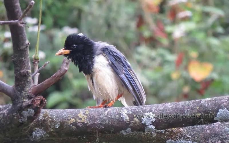 A bird at Joshimath