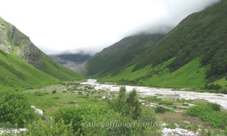 As time passes the plants in Valley of Flowers get mature and you can see lesser number of flowers are visible. Leaves of the plants starts turning color to yellowish green/peach.