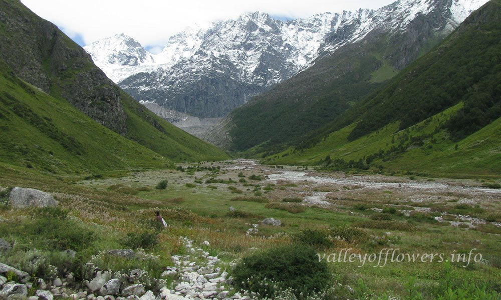 This is the last phase when Valley of Flowers is accessible to general public. After this snowfall will start in the month of the October, and Valley of Flowers will be snow capped again and all the plants will shed seeds and seeds will be preserved under snow to germinate again in next season when snow starts melting in May.