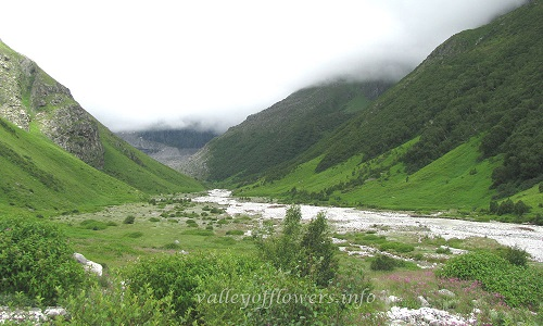 Valley of Flowers in August