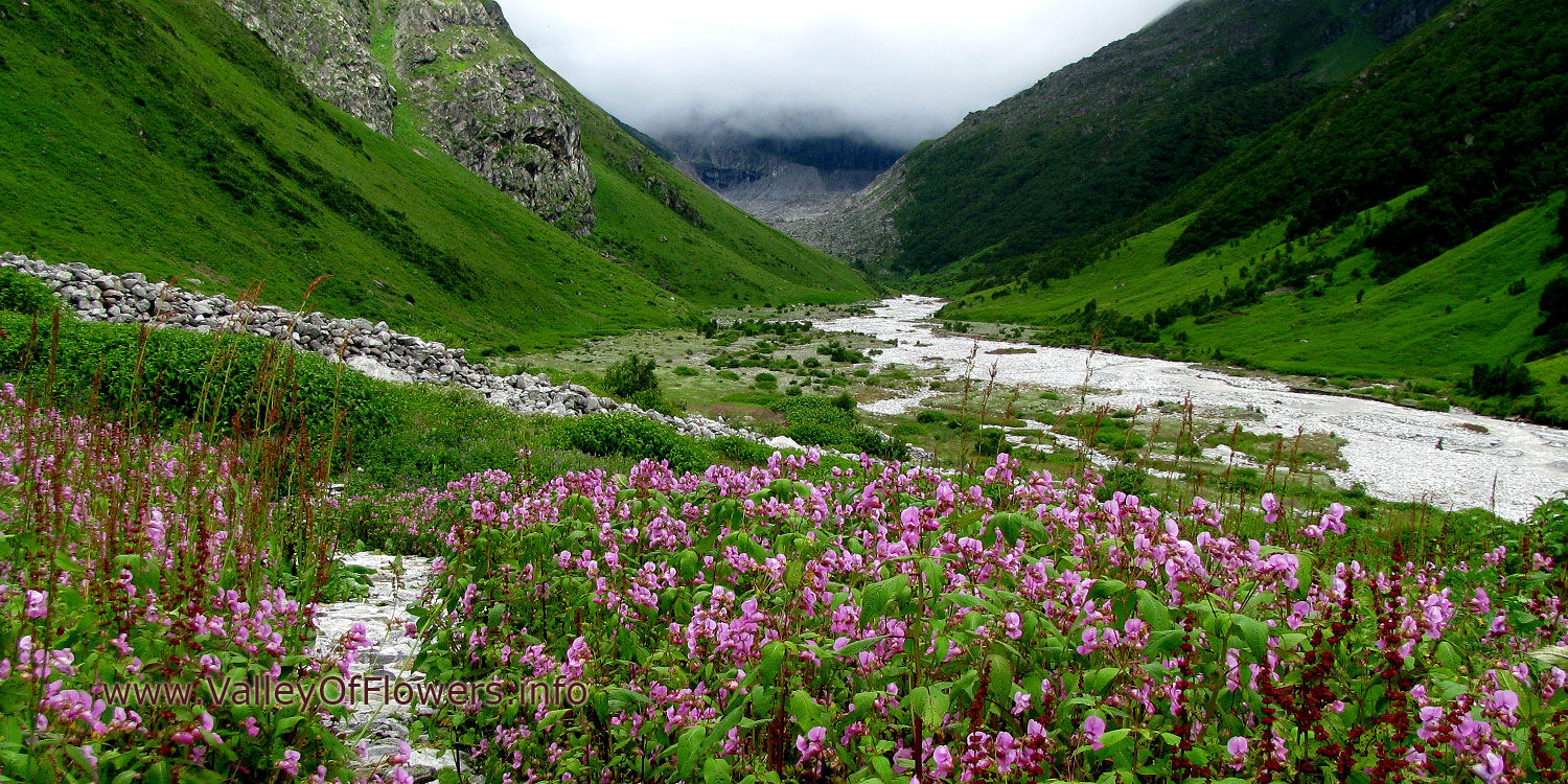 Valley of flowers piture gallery and wallpaper : Pushpawati river bed and Impatiens flowers.