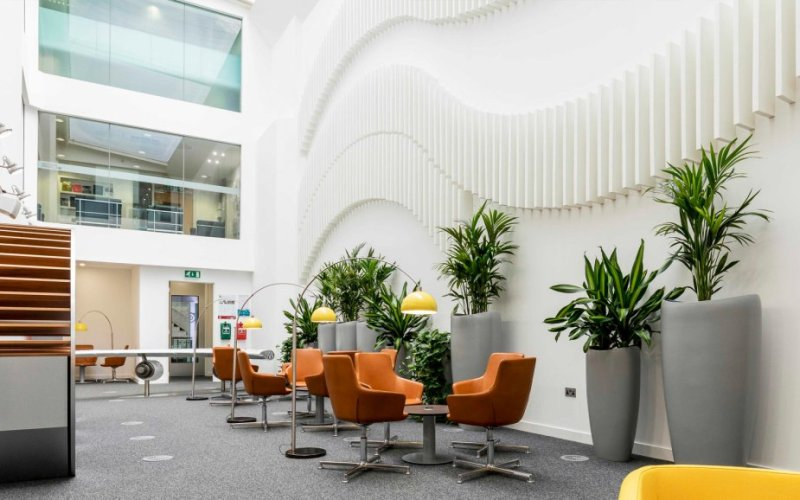 Office Planting Ideas – Exploring the best locations to have Plants in your Offices