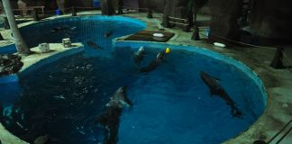 delfines-cauteverio