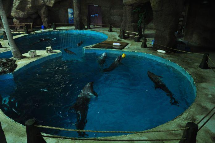 delfines-cauteverio