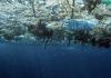 Depredación y contaminación, las pandemias que sufren los océanos