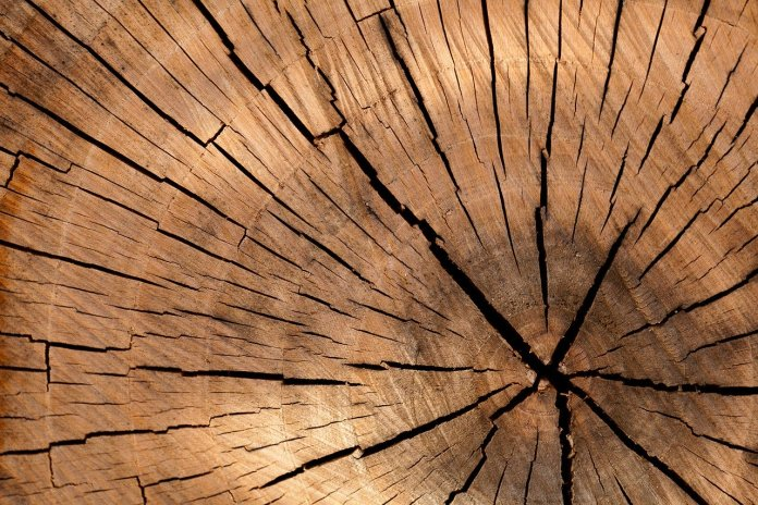 Cartón y madera como materia prima sustentable