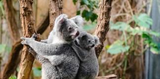 10 animales en peligro de extinción a causa del cambio climático