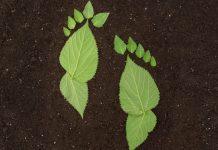 ¿Cómo reducir la huella de carbono?