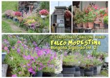 B2_FalcoModestina_rid