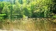 Paradiso delle rane, Parco Orsiera Rocciavrè