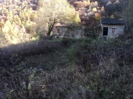rimozione vegetazione Presa Casel 3
