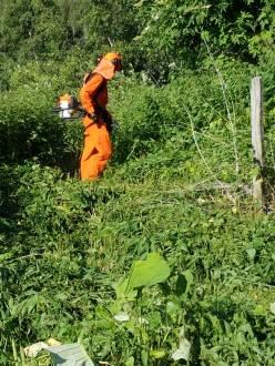 rimozione vegetazione Presa Casel 8