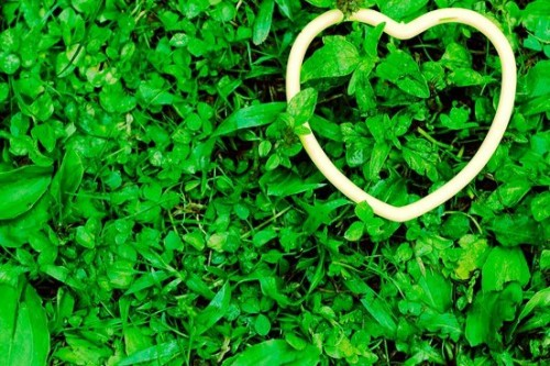 chlorophyll benefits to heart