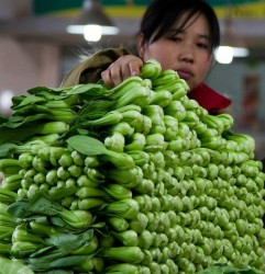 bok choy sold in market place