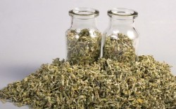 dried damiana herb