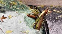 Copac căzut pe o mașină în mers. FOTO Mihai Călin Facebook