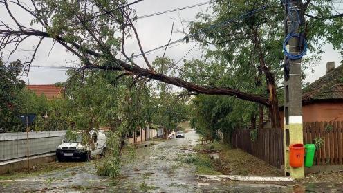 Copac rupt de furtună pe strada Republicii din Valu lui Traian