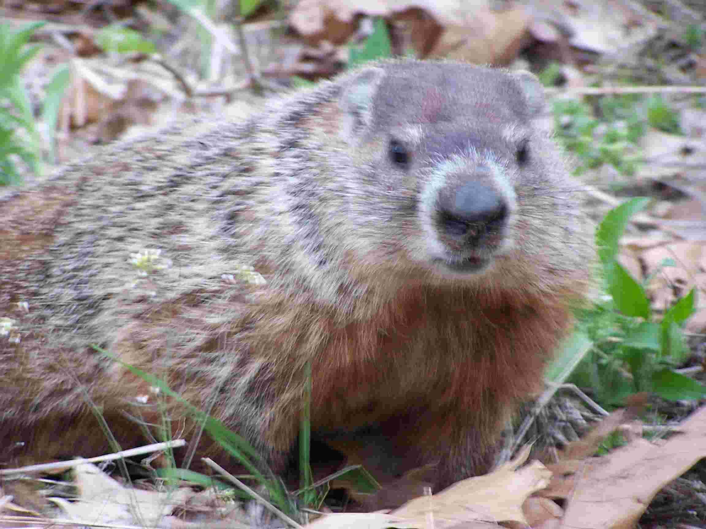 Mammals Wild Animal Best Blog Wild Animals In Northern