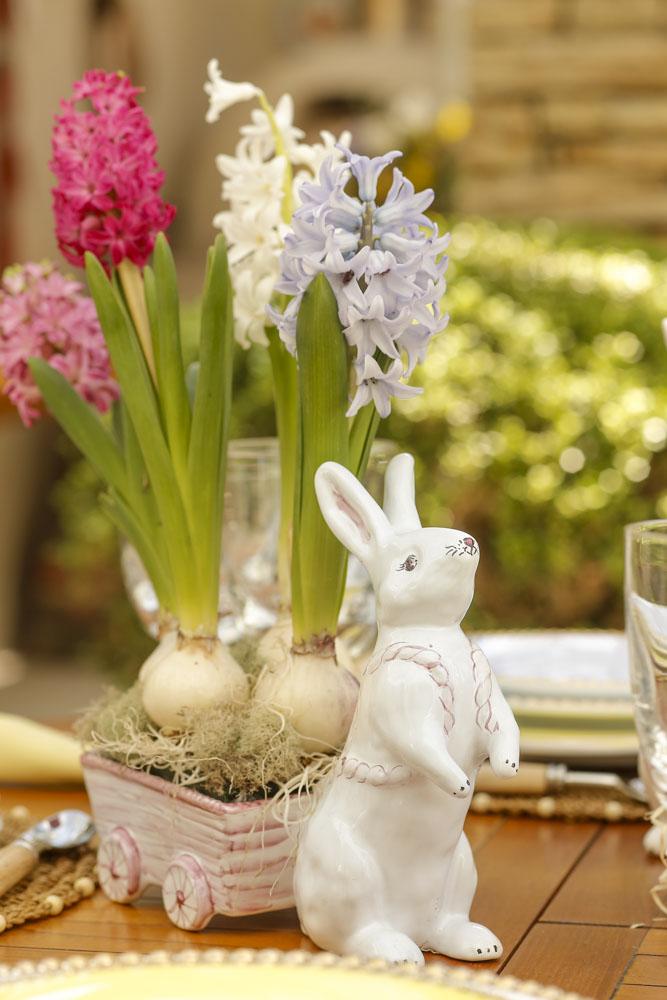 hyacinthus em carrocinha de coelho