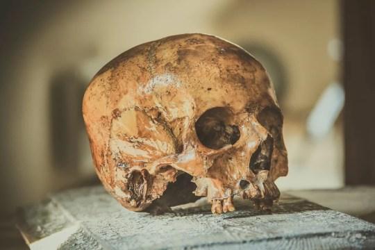 Crânio Skull