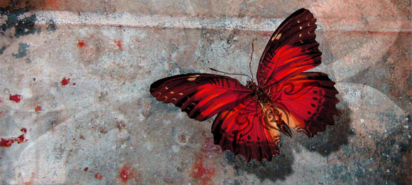 Haunting Butterflies Of Death