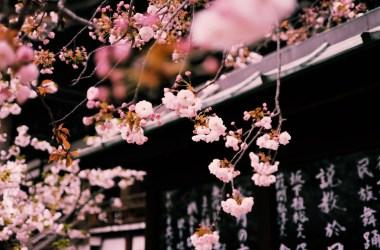 coupon sconti sakura