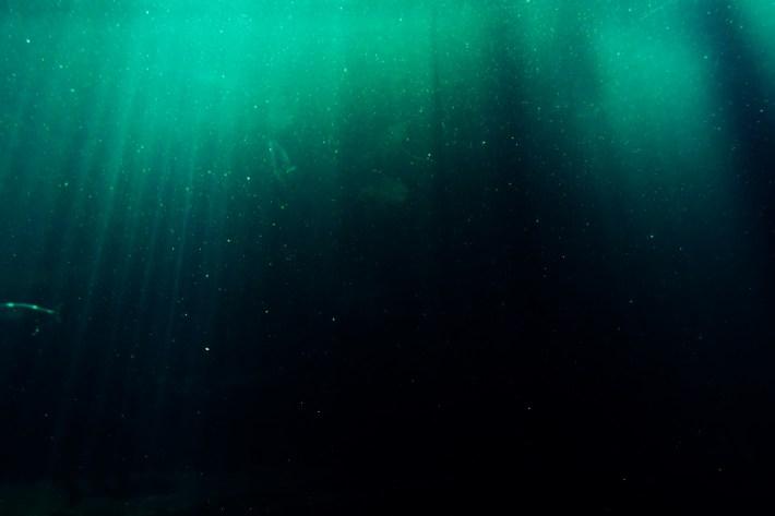 Segnalazione di Le note del mare