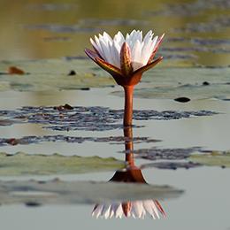 Afrika reizen Botswana
