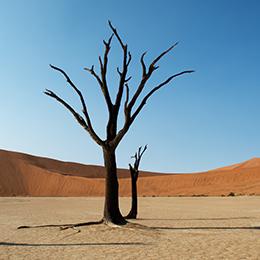 Afrika reizen Namibie