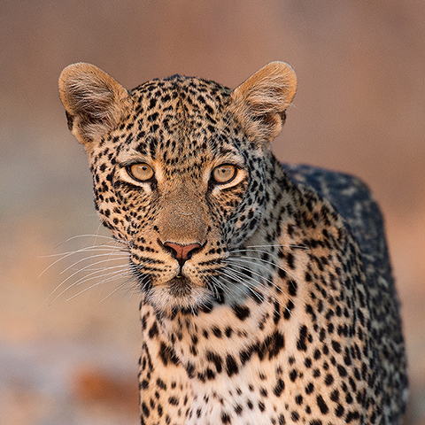 Photo Safari trips in Africa