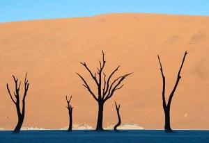 Safari Afrika Namibië