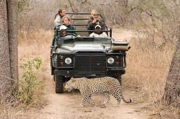 Rondreis Zuid Afrika-safari