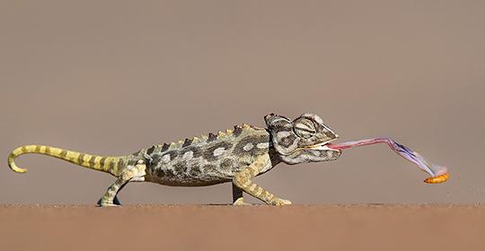 Rondreis Namibie Swakopmund