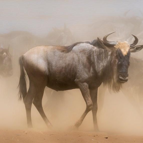 migration Kenia