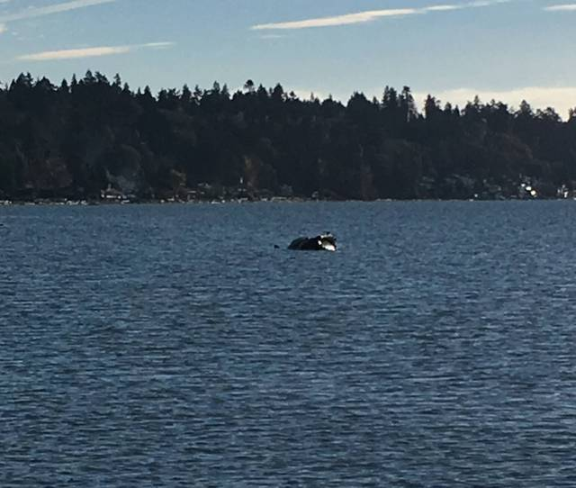 Humpback Found Dead Near Bc Ferries Terminal Killed By Ship Strike Dfo Says