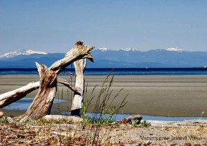 Heading to Vancouver Island? Discover why the beaches of Parksville are the cities main attraction.