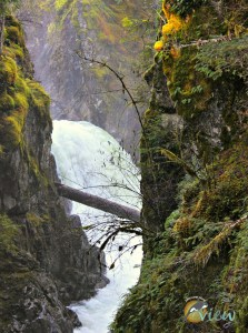 If you are looking for a nice easy hike with spectacular scenery while in the Parksville area, then Little Qualicum Falls is for you!