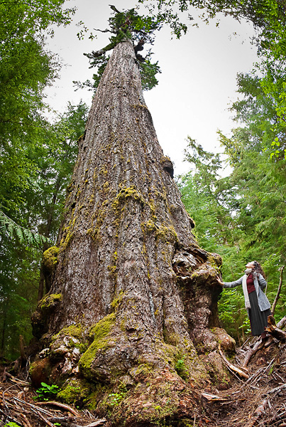 Red Creek Fir - fascinating finds on Vancouver Island