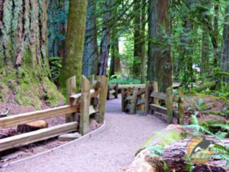 Cathedral Grove is one of the top ten incredible wonders of the Oceanside area.