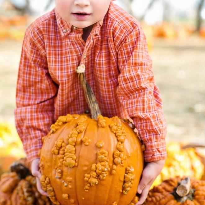pumpkins patch richmond