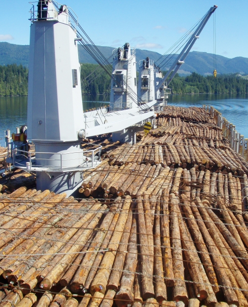 A Laser Ace bulk carrier is loaded with logs on northern Vancouver Island for export to Asia. Supplied by Lemare Lake Logging Ltd.