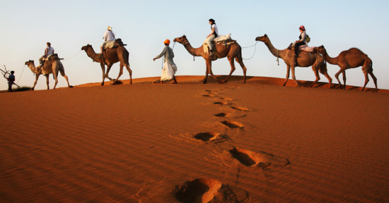 desert photography camels