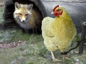 chicken_and_fox_2