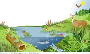 Ecosysteem 7
