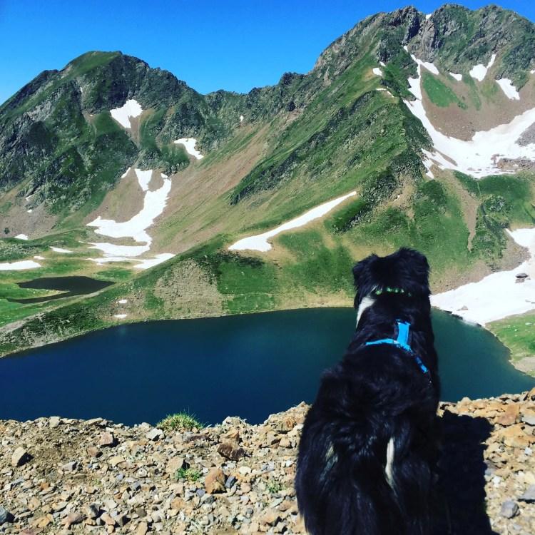 Wanderung Hautes-Pyrénées Col de Tourmalet Hund
