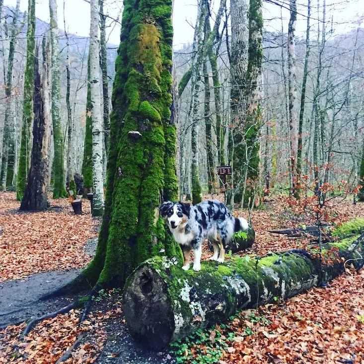 Montenegro Hund Camping Nationalpark Wohnmobil Biogradska Gora